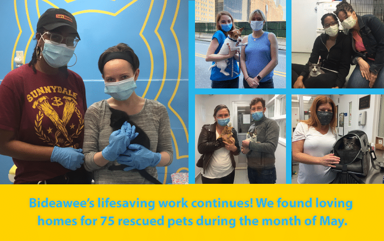 Bideawee's lifesaving work continues! We found loving homes for 75 rescued pets during the month of May.