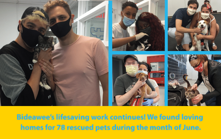 Bideawee's lifesaving work continues! We found loving homes for 78 rescued pets during the month of June.