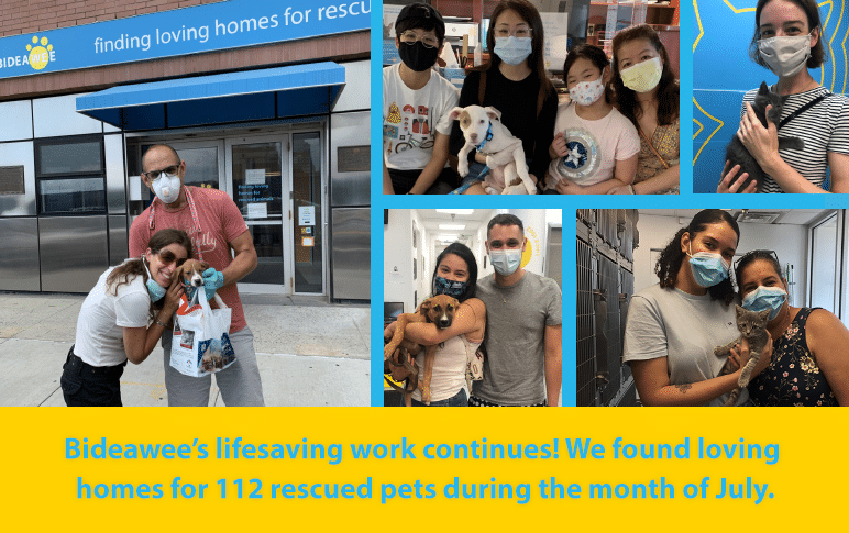 Bideawee's livesaving work continues! We found loving homes for 112 rescued pets during the month of July.