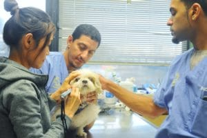 Two veterinarians helping to examine a woman's small dog.