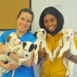 Bideawee staff with puppies