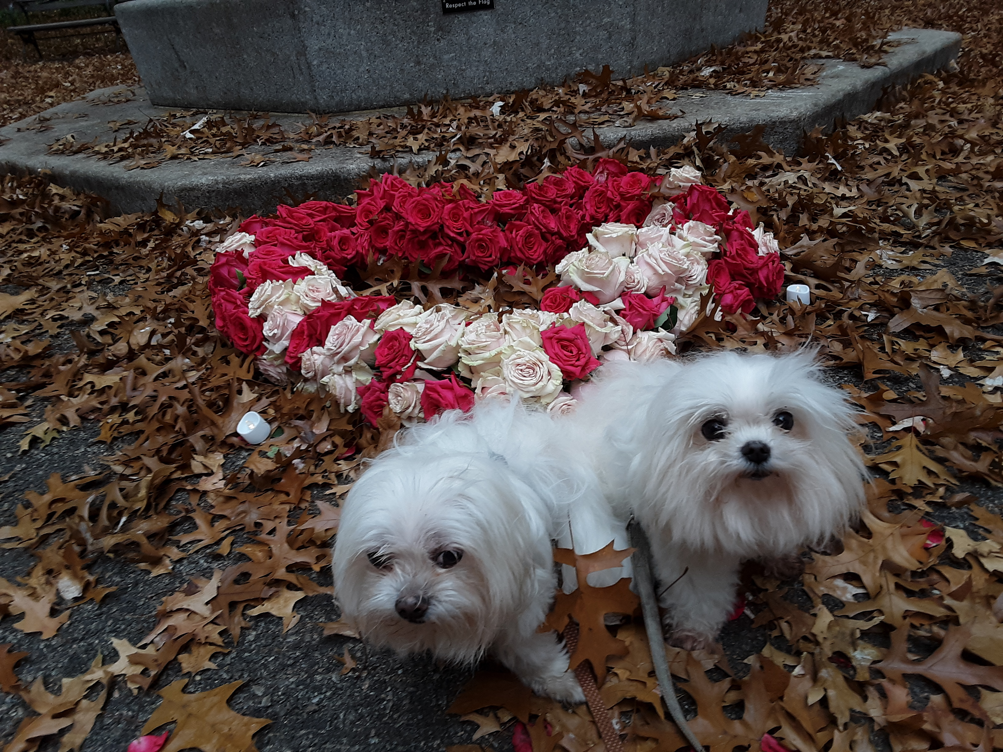 Lacey and Rudy