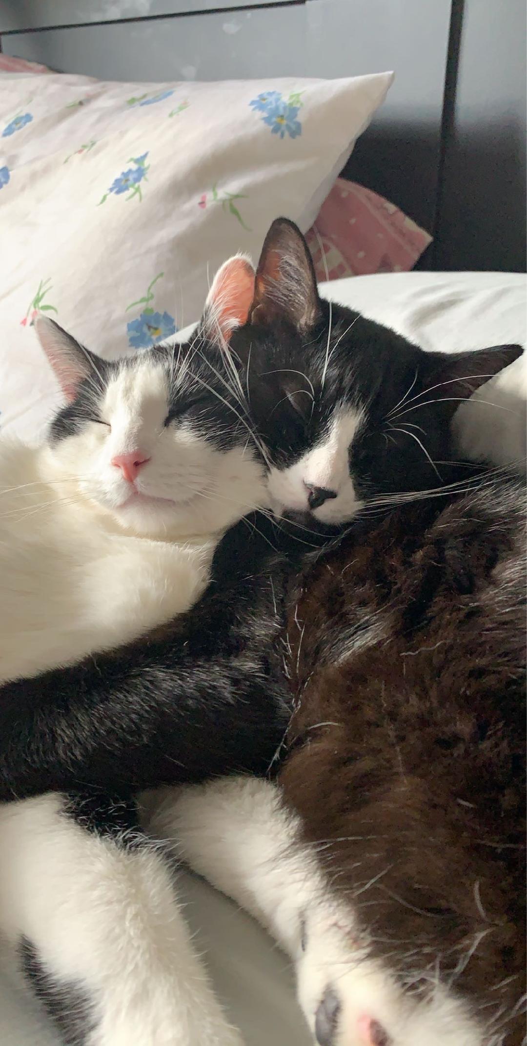Oreo & Milo