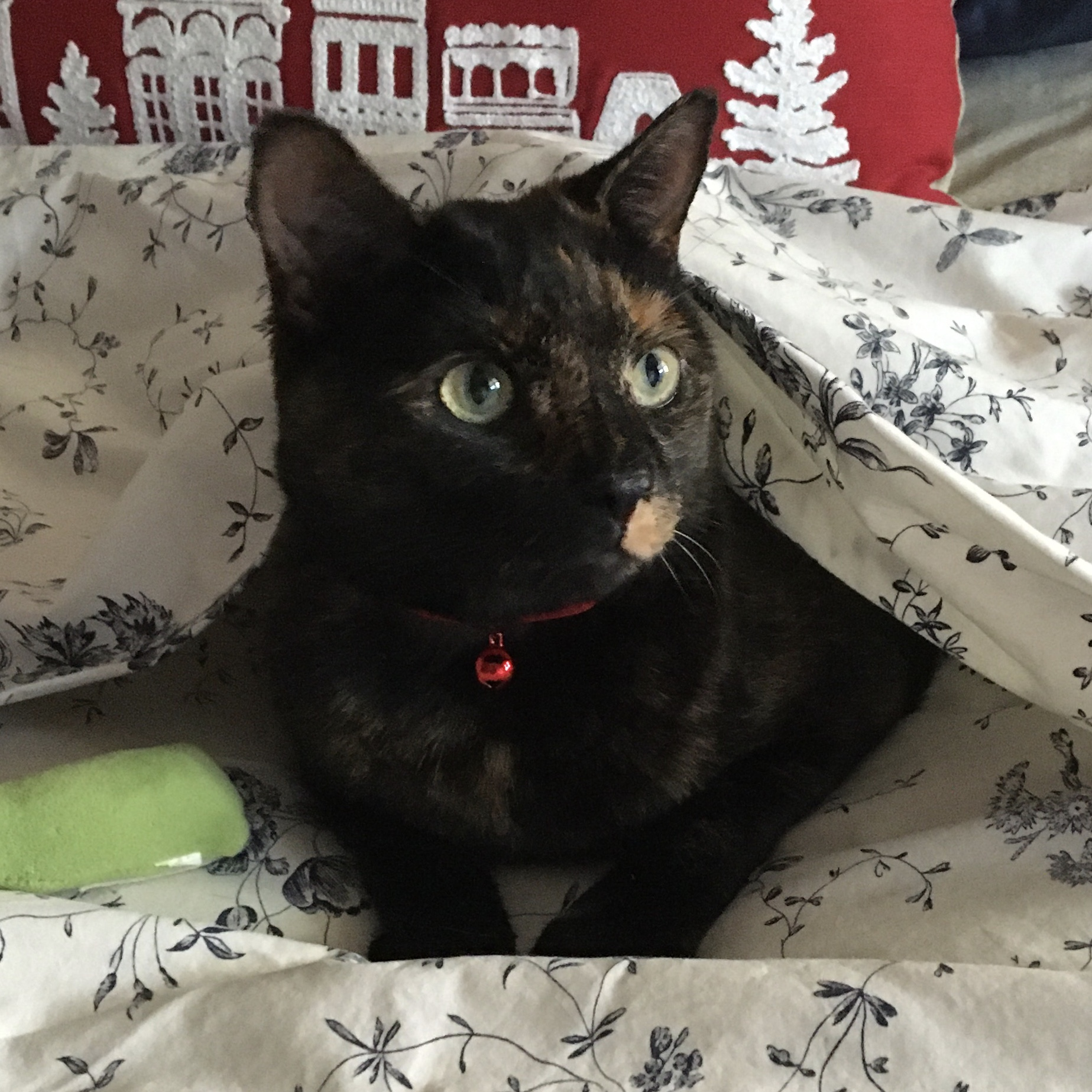 Kiki (formerly Mila)